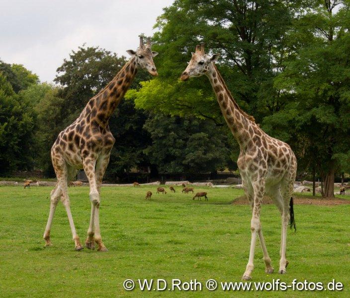 Zoo Augsburg
