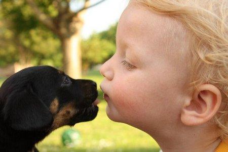08 Nenad Djordjevic Serbia - Puppies
